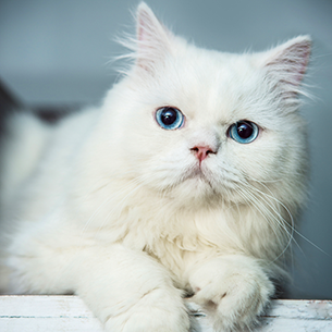 Kedi Köpek Tedavi Veteriner